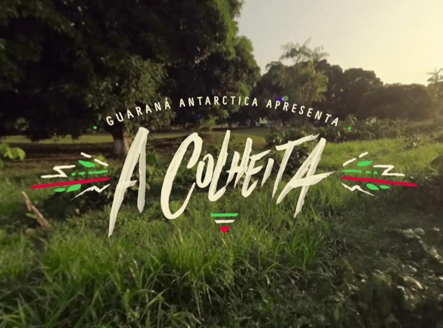 Guarana Antarctica – A Colheita